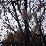 新宿御苑桜紅葉