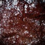 秋色のカーテン