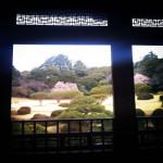 新宿御苑のカンザクラ