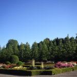 新宿御苑のバラ花壇