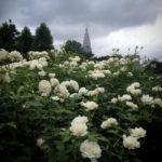 モノクロームな午後:薔薇の白雪姫