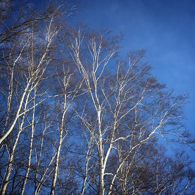 ️️️ #sky #clouds #hokkaido #Whitebirch #北海道 #空 #雲 #白樺 #ソラ #イマソラ