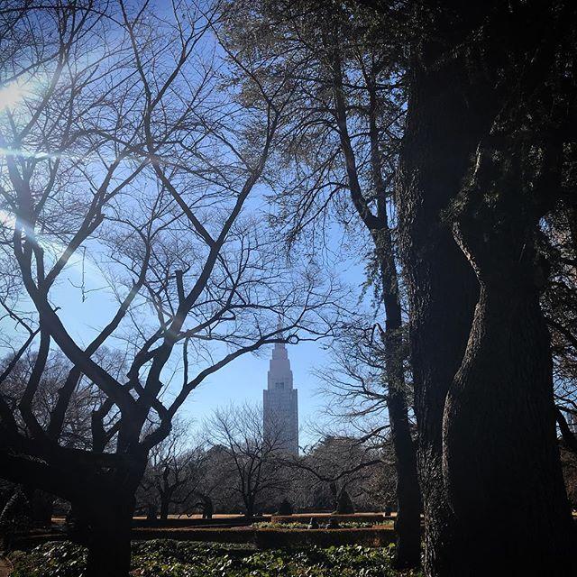  #sky #shinjukugyoen #shinjuku  #tokyo #空 #新宿御苑 #ソラ #イマソラ