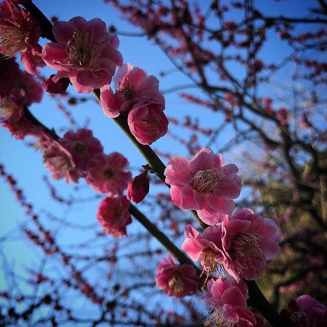 めっちゃ晴れ️ #sky  #shinjuku #shinjukugyoen  #tokyo #cherryblossom #sakura #新宿御苑 #空 #ソラ #イマソラ #桜