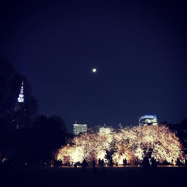 新宿御苑夜桜ライトアップ #sakura #cherryblossom #sky  #shinjuku #shinjukugyoen  #tokyo #新宿御苑 #夜桜 #桜 #空 #ソラ