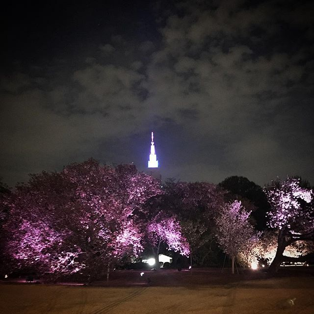 新宿御苑夜桜ライトアップ今週はイベントもあるよ。 #sakura #cherryblossom #sky  #shinjuku #shinjukugyoen  #tokyo #新宿御苑 #夜桜 #桜 #空 #ソラ