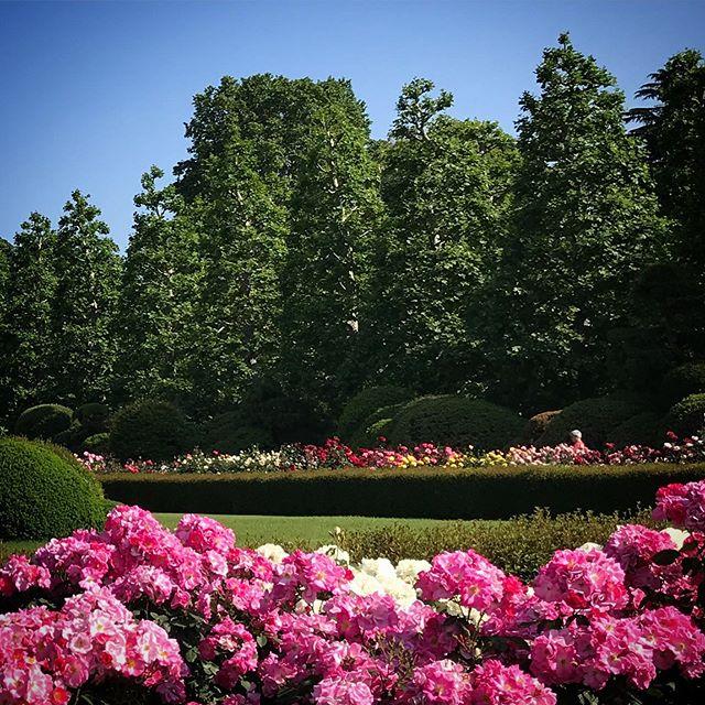 #sky #rose #flowers #shinjuku #shinjukugyoen  #tokyo #新宿御苑 #空 #薔薇 #バラ #ソラ #イマソラ