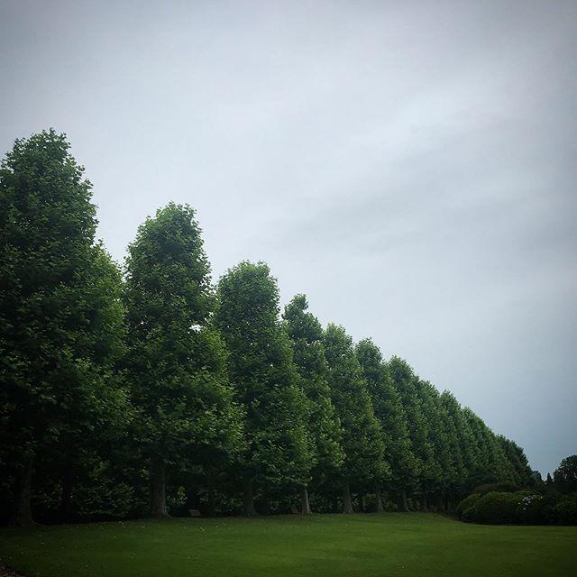 ️ポツポツ来ました。️️️ #sky #clouds #shinjuku #shinjukugyoen  #tokyo #新宿御苑 #空 #雲 #ソラ #イマソラ