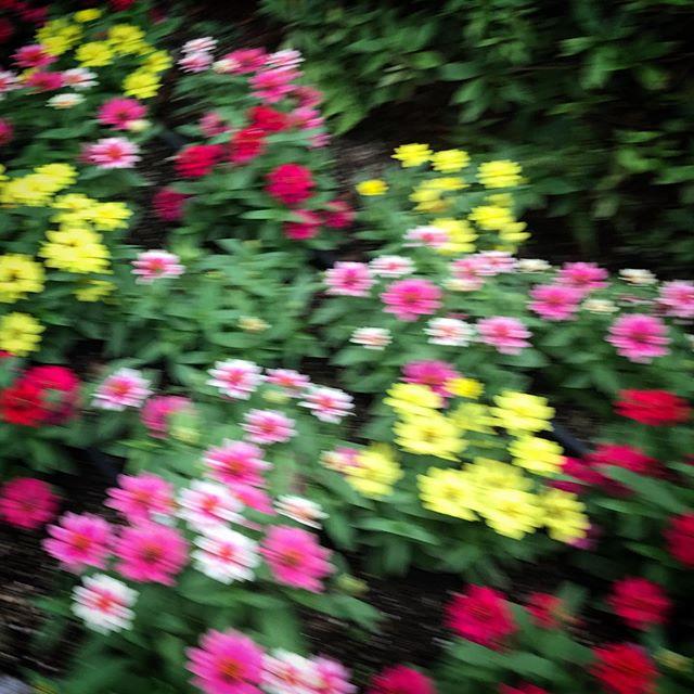 写真フォルダの中にあった謎画像ブレブレやん🏻♀️お散歩中に撮っちゃったかな? #flowers #walking #おさんぽ
