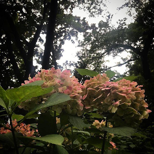️️️ #sky #clouds #shinjuku #shinjukugyoen  #tokyo #flower #hydrangea  #新宿御苑 #紫陽花 #あじさい #空 #雲 #ソラ #イマソラ