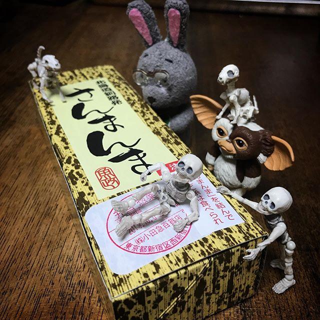 秋の味覚DEATH!☠️ #Gizmo #Mogwai #Gremlins #poseskeleton #skeleton #skeletondog #skeletoncat #usaji  #ギズモ #モグワイ #グレムリン #謎生物 #ポーズスケルトン #リーメント #うさじい #北海道物産展 #さんまんま