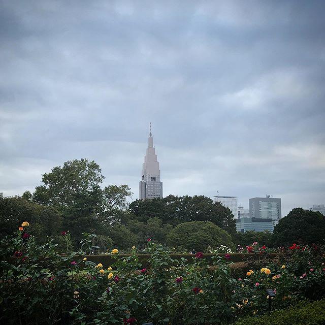 ️️️秋の薔薇もそろそろお終いかなぁ? 🥀 #sky #clouds #shinjuku #shinjukugyoen #rose  #tokyo #新宿御苑 #空 #雲 #ソラ #薔薇
