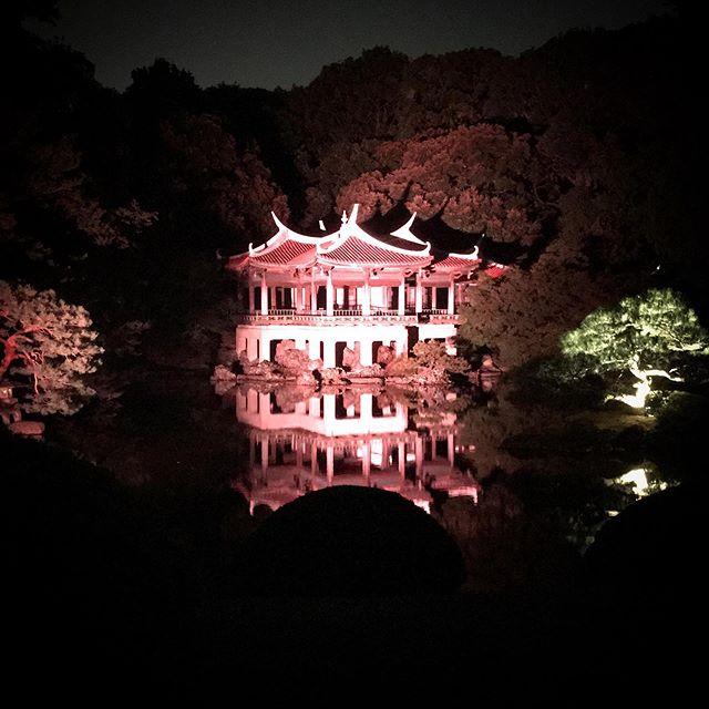 夜の菊は上手に撮れなかった #shinjuku #shinjukugyoen  #tokyo #新宿御苑