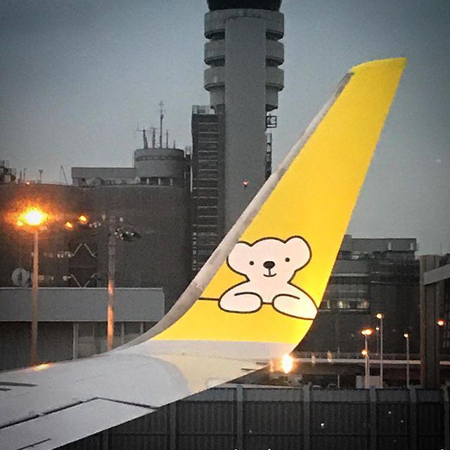 ️安定の熊珈琲とPAULのパン🥐めちゃウマ〜🛩そして上陸!#北海道 #熊珈琲 #エアドゥ #ベアドゥ #冬休み#airplane #AirDo #BearDo #hokkaido #coffee #kobo #travelersnotebook #winterholiday #paul #airpods