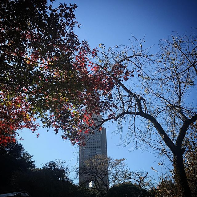いつかの空 #sky #shinjuku #tokyo #shinjukugyoen #空 #雲 #ソラ #紅葉 #新宿御苑