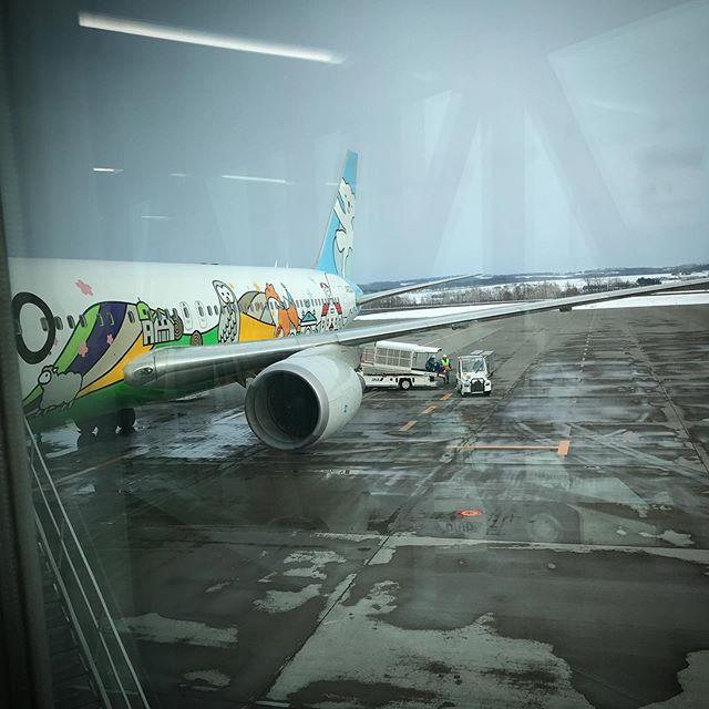 冬休みオワタ🛩 #北海道 #エアドゥ #ベアドゥ #冬休み #空 #ソラ #airplane #AirDo #BearDo #hokkaido #winterholiday #sky