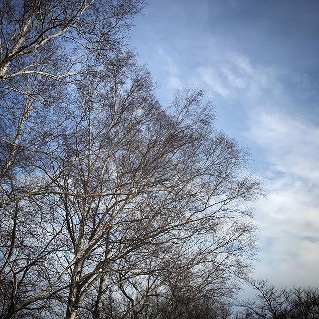 ️🌥️ #sky #clouds #hokkaido #北海道 #空 #雲 #ソラ