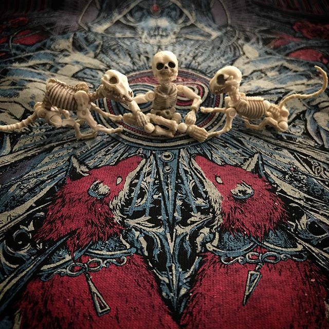 🏻🦊☠️グッズ はほとんど売切れてたけど🥺ライブはメチャくそ楽しかったDEATH!☠️最&高!!! #babymetal #metalgalaxyworldtourinjapanextrashow #poseskeleton #skeleton #skeletondog #skeletoncat #ポーズスケルトン #リーメント