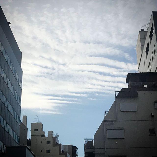 🌤今日は一日ポカポカだったね️️️ #sky #clouds #shinjuku #tokyo #空 #雲 #ソラ #けさそら