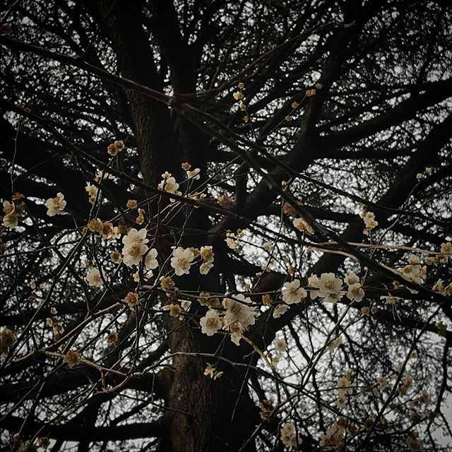 今日傘マーク付いてなかったよね?だまされた️間が悪かった🥺#shinjukugyoen #shinjuku #tokyo #flower #flowerstagram