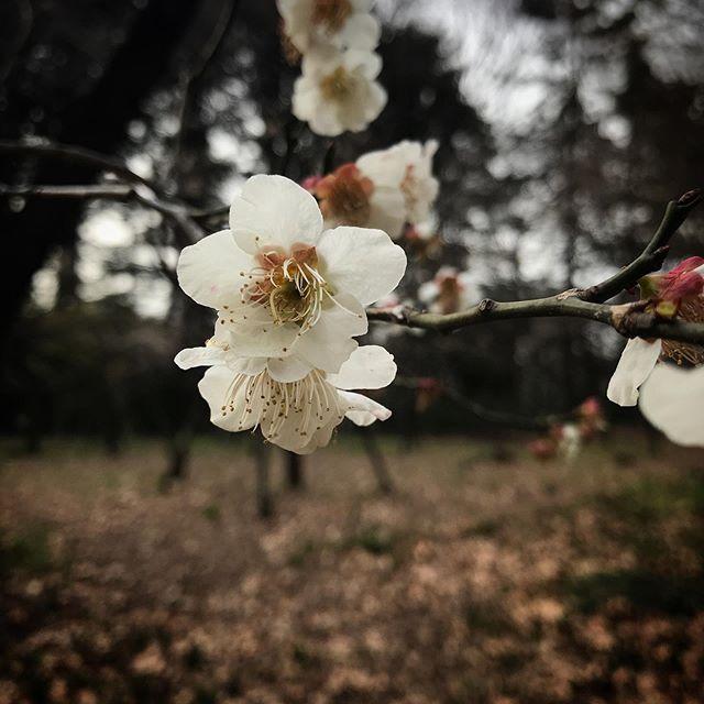 ちょっこし咲いちょったよ#shinjukugyoen #shinjuku #tokyo #flower #flowerstagram